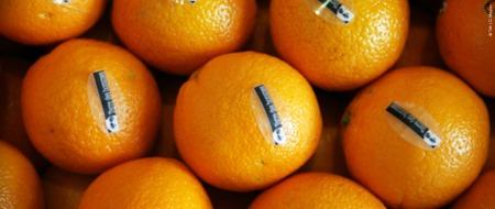 oranges-tdh